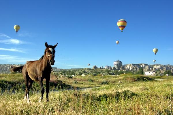 """AT VE BALONLAR (Horse and balloons)  *İspanya'da yapılan FIAP patronajlı IV Saló Internacional Fotogràfic Andorra 2013 fotoğraf yarışmasında """"phototravel"""" kategorisinde sergileme."""