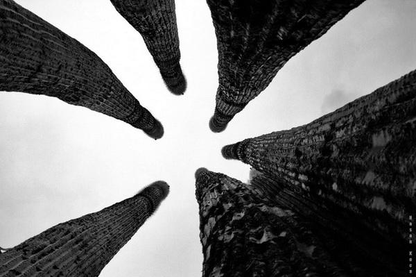 """KAKTÜSLER (Cacti)  *Sırbistan'da yapılan """"2013 yılında ABD ÇEVRESİNDE DÜNYA"""" konulu fotoğraf yarışmasında """"nature"""" kategorisinde sergileme."""