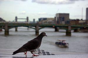 london-08.jpg